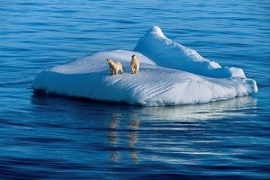 polar_bears_on_iceberg__arctic_ocean__canada_14367