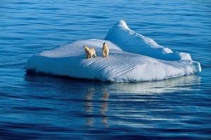 polar_bears_on_iceberg__arctic_ocean__canada_14367